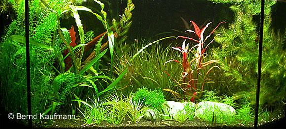 Fazit aquamax for Algen im aquarium