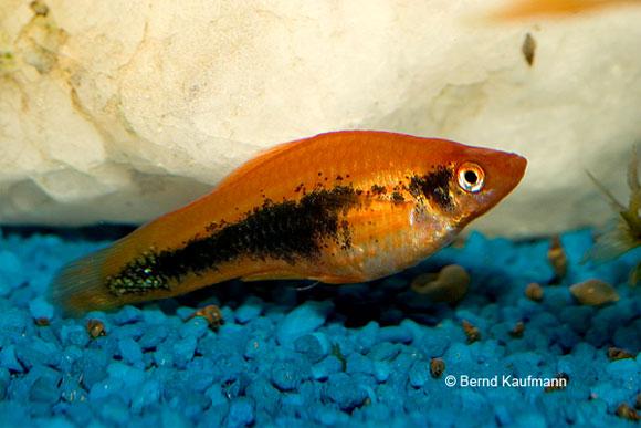 Vorbeugung und behandlung aquamax for Aquarium fische im gartenteich